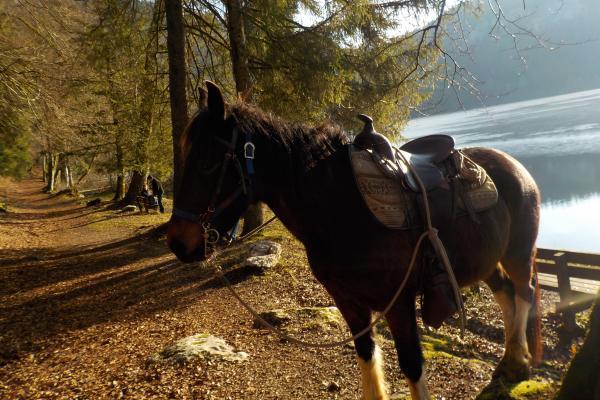 Randonnée à cheval dans le jura